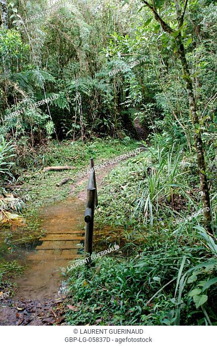Forest, Nature, Serra do Mar State park, Núcleo Santa Virgínia, São Paulo, Brazil
