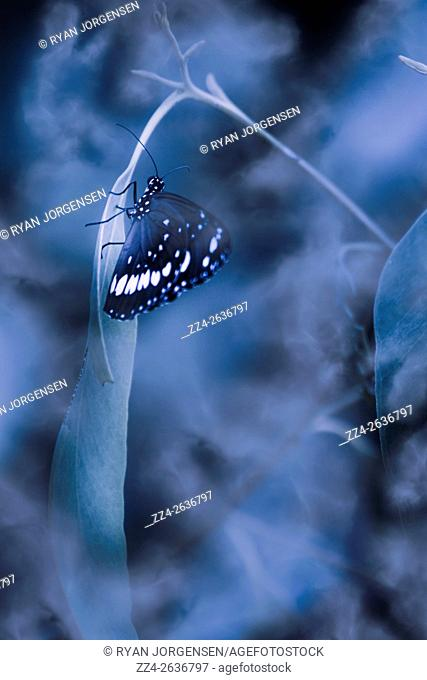 Creative blue nature photo of a butterfly clutching a midnight leaf in a mist cover rainforest