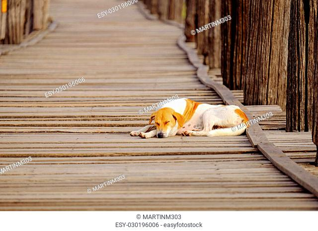 Moody image of dog sleeping on textured wooden boardwalk, Ubein bridge, Amarapura, Myanmar