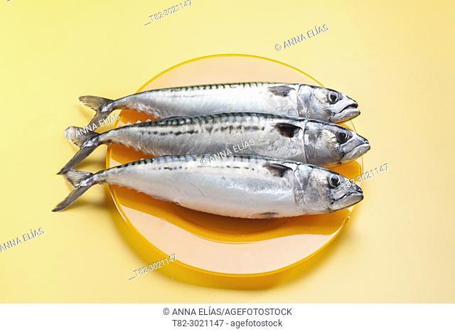 orange dish with three raw fresh mackerels