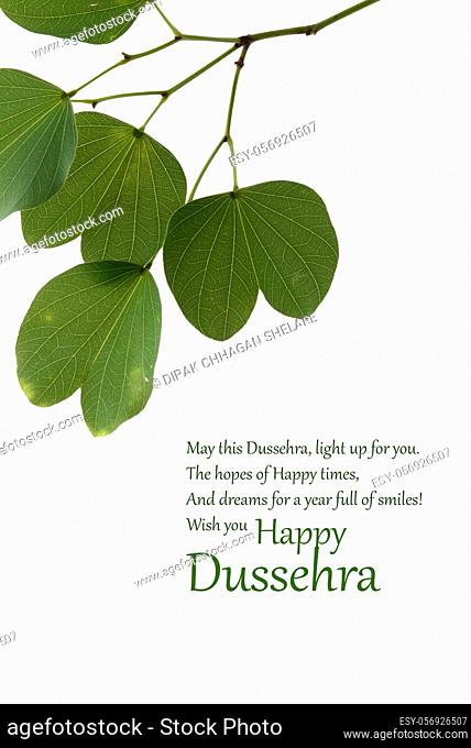 Indian Festival Dussehra, showing golden leaf, Piliostigma racemosum, Greeting card,