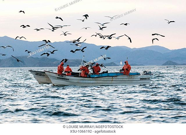 Fishermen with long line or handline jigging for humboldt or jumbo squid