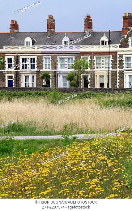 UK, Wales, Cardiff, Bay, Wetlands Reserve, scenery, wildflowers,