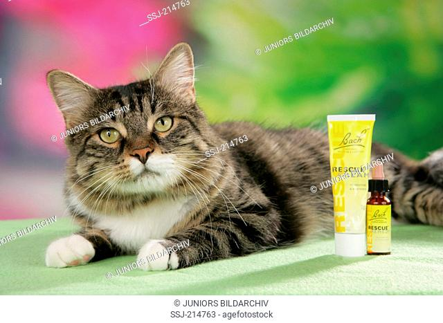 Domestic cat. Tabby adult lying next to Bach flower remedies. Germany