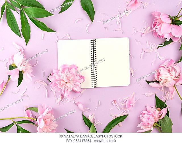 open spiral notebook with blank white pages on a purple background, blooming pink peonies around the perimeter, top view