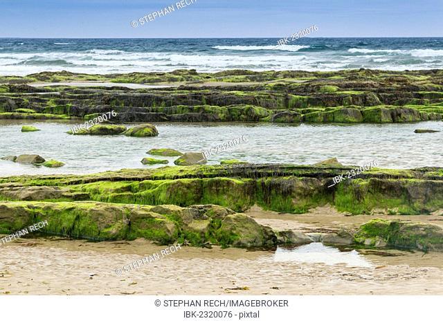 Coast at Seahouses, Northumberland, England, United Kingdom, Europe