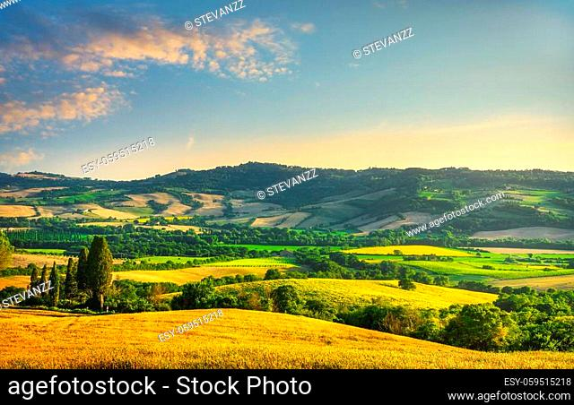 Field of wheat and blooming sunflowers at sunset, summer landscape in Tuscany, Italy