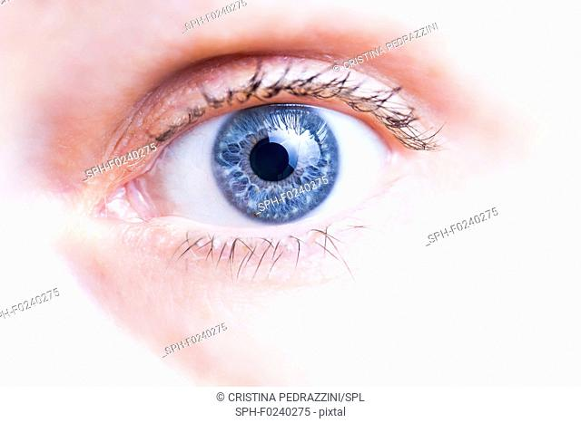 Close-up of healthy human eye