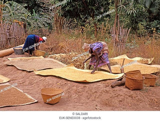 Grains Drying in the Sun,Senegal