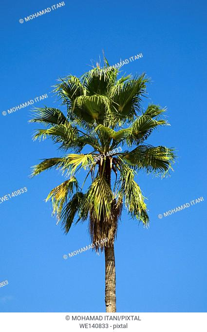 Green palm tree against blue sky