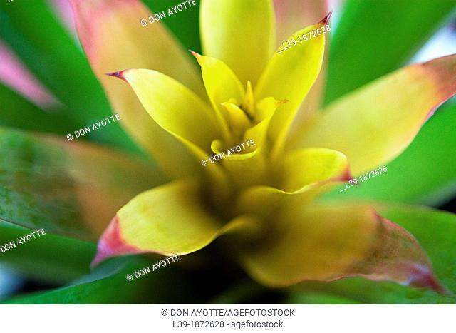 Yellow is a flower