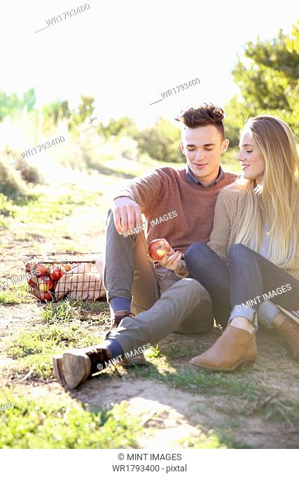 An apple orchard in Utah. Couple sitting on the ground, a basket of apples