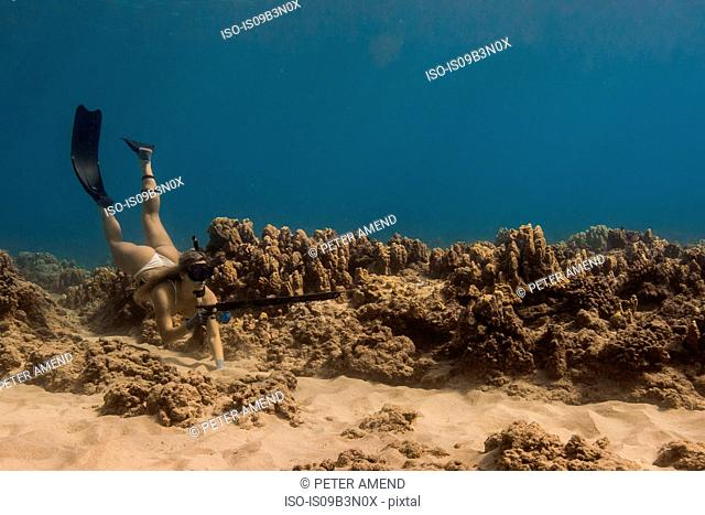 Underwater view of woman spearfishing, Oahu, Hawaii, USA