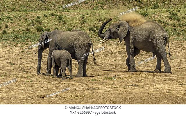 Africzn Elephant dusting in Masai Mara