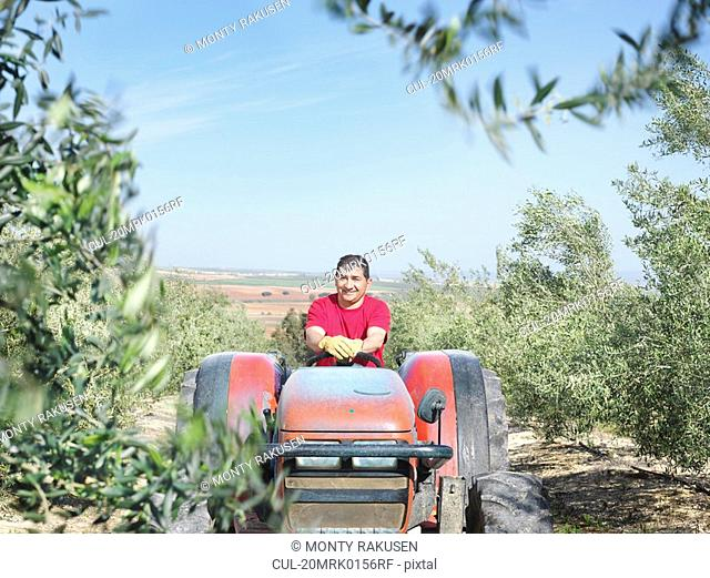 Man on tractor in olive grove