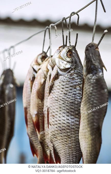 salted river fish ramming in scales hanging on an iron hook, vintage toning