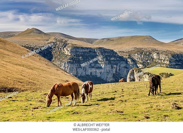 Spain, Aragon, Central Pyrenees, Ordesa y Monte Perdida National Park, Canon de Anisclo, wild horses on meadow