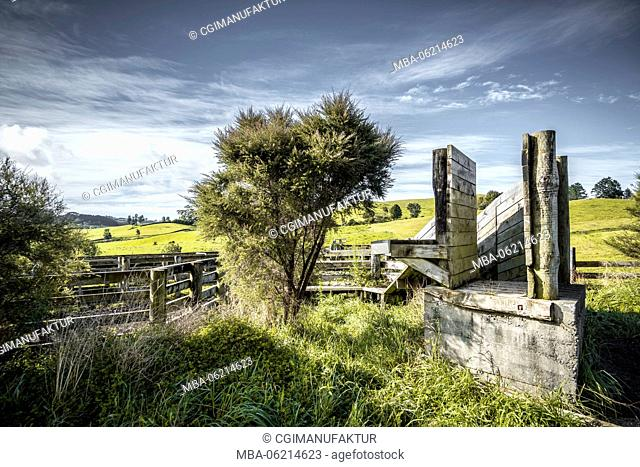 New Zealand, Commonwealth, North Island, sheep farming, agriculture
