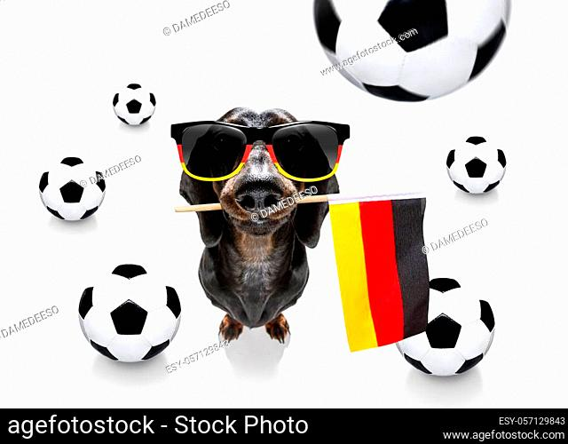 soccer football sausage dachshund dog playing with leather ball, isolated on white background and german flag