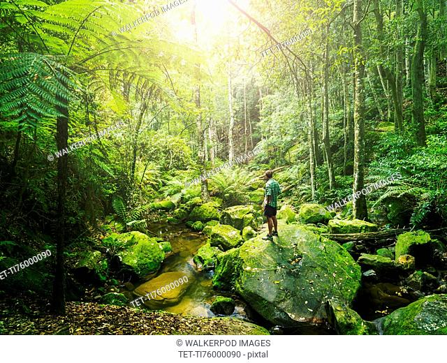 Mid adult man standing on rock in green forest