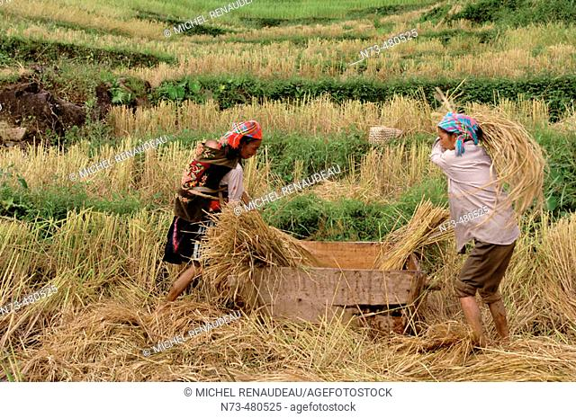North Vietnam, Lai Chau region, rice field