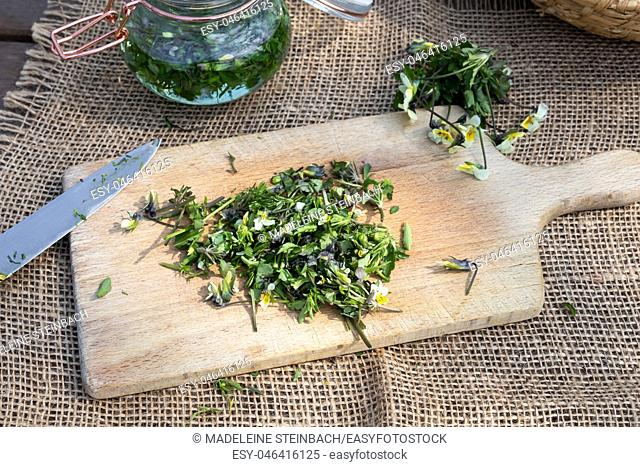 Cutting Viola arvensis flowers to prepare homemade tincture