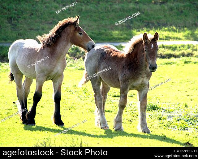 two horses mother and young one