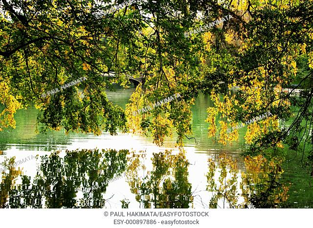 Beautiful green and yellow leaves hanging from tree branches over a lake, Autumn fall scenery with awesome colors