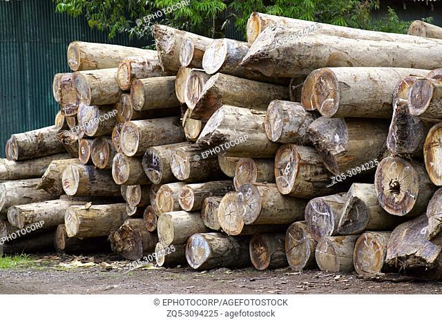 Wood Logs at Chatham Saw Mill Haddo, Port Blair, Andaman
