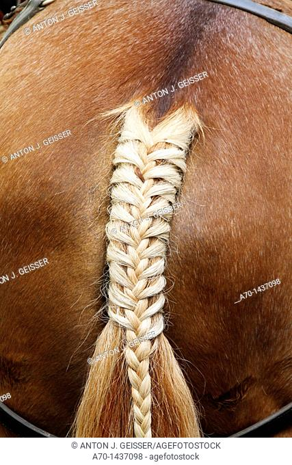 Decorated horse tail , switzerland