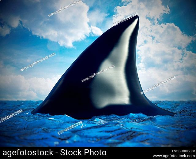 Shark fin on the water. 3D illustration