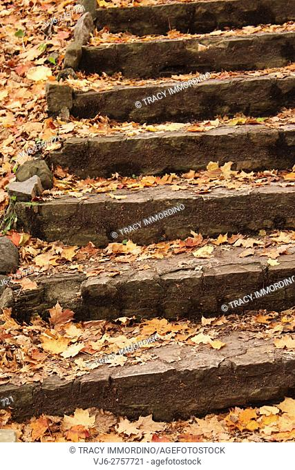 Stone steps covered with scattered fall leaves in a forest preserve