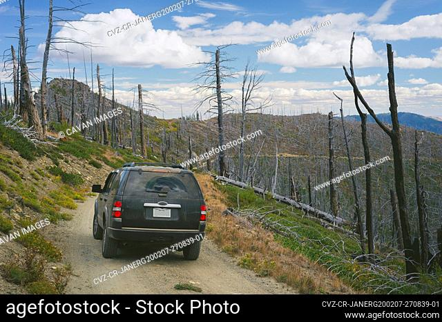 SUV On Gravel Road In The Mountains Surrounded By Dead Burned Trees