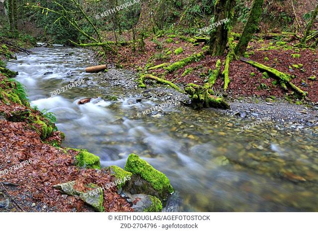 Niagara Creek in Goldstream Provincial Park, near Victora, British Columbia