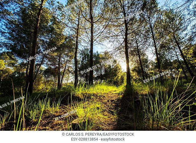 Volpelleres forest at Sant Cugat del Valles Barcelona Spain
