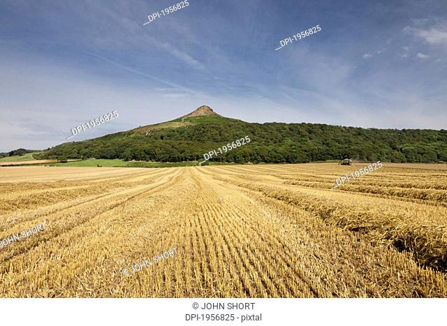 A Field Of Wheat With A Peak On The Top Of A Hill In The Background, Roseberry Topping North Yorkshire England