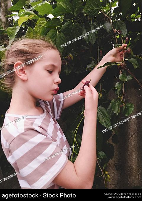 Girl looks at a ripe mulberry in her hand near a tree in the garden