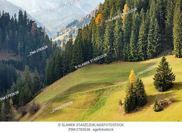Autumn morning on an alpine meadow near Bruneck, Dolomites, Italy