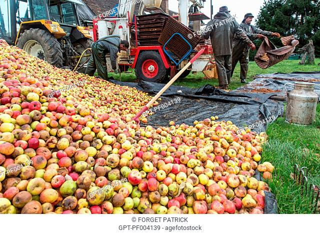 APPLE PRESS AND CRUSHING OF THE APPLES TO MAKE FARM CIDER, CLAUDE COURBE'S FARM, RUGLES (27), FRANCE