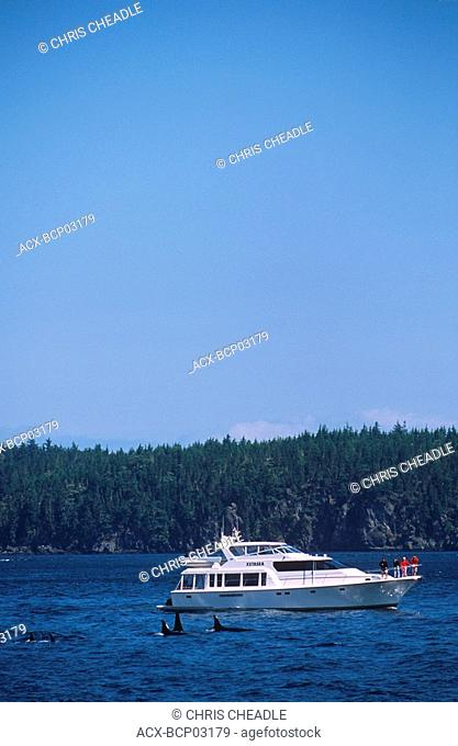 Telegraph Cove based whale watching / nature tour from boat M V  Lukwa, Vancouver Island, British Columbia, Canada