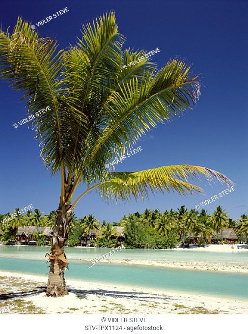 Aitutaki, Atoll, Beach, Cook islands, Holiday, Island, Landmark, Palm trees, Polynesia, Sand, Sea, South pacific, Tourism, Trave