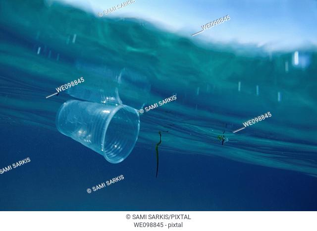 A plastic cup floating at the ocean surface