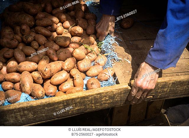 Pile of potatoes with hands of the salesman in a market store in Meknes, Mekines, Historic City, Heritage, Morocco, Africa