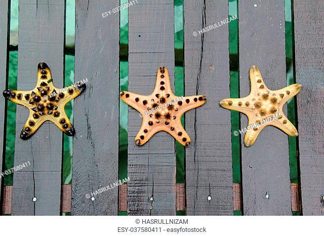 Three different color of starfish