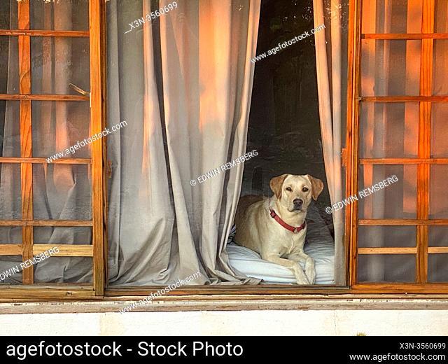 Dog Through a Window in Namibia