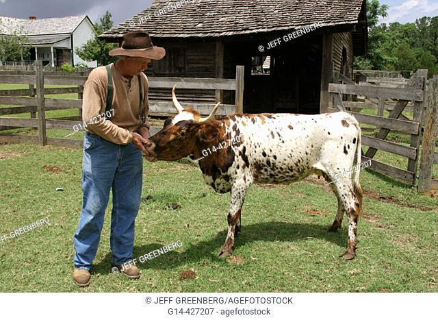 Landmark Park, Living History Farmstead c.1901, farmer, piney woods cow. Dothan, Wiregrass Region. Alabama. USA