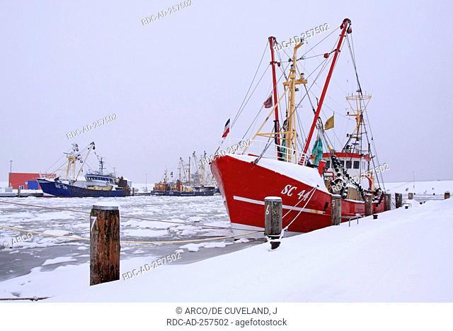 Fishing boats harbour Busum North Sea coast Dithmarschen district Schleswig-Holstein Germany frozen