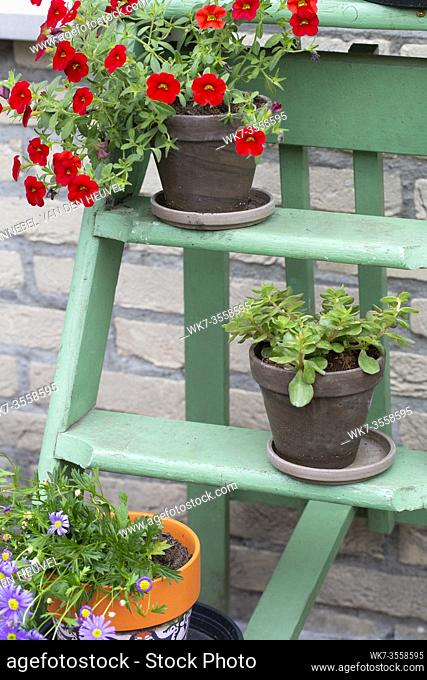 Various colorful flowers in pot on small green wooden stairs in the garden for decoration, close-up