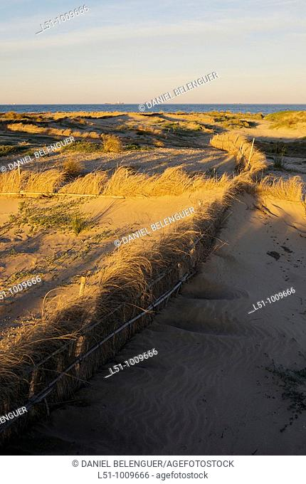 Fences made of grass protecting dunes from erosion on Albufera natural park, Valencia, Spain