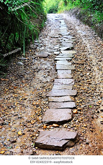 Pavement on a forest trail, My Son Sanctuary, Vietnam, Southeast Asia